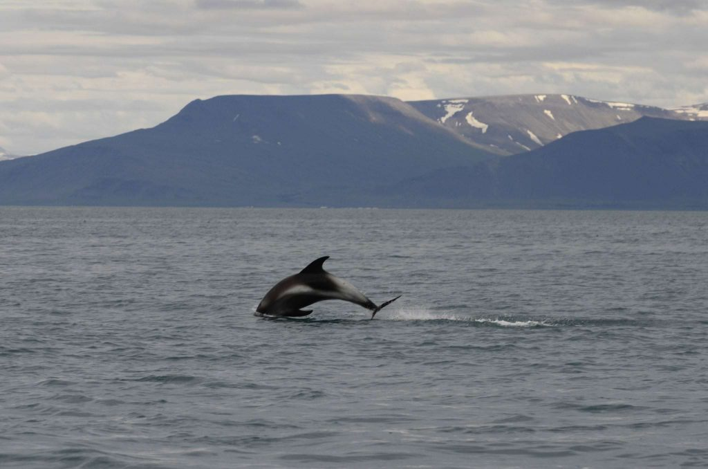 whale watching and image peace tower tour, Iceland