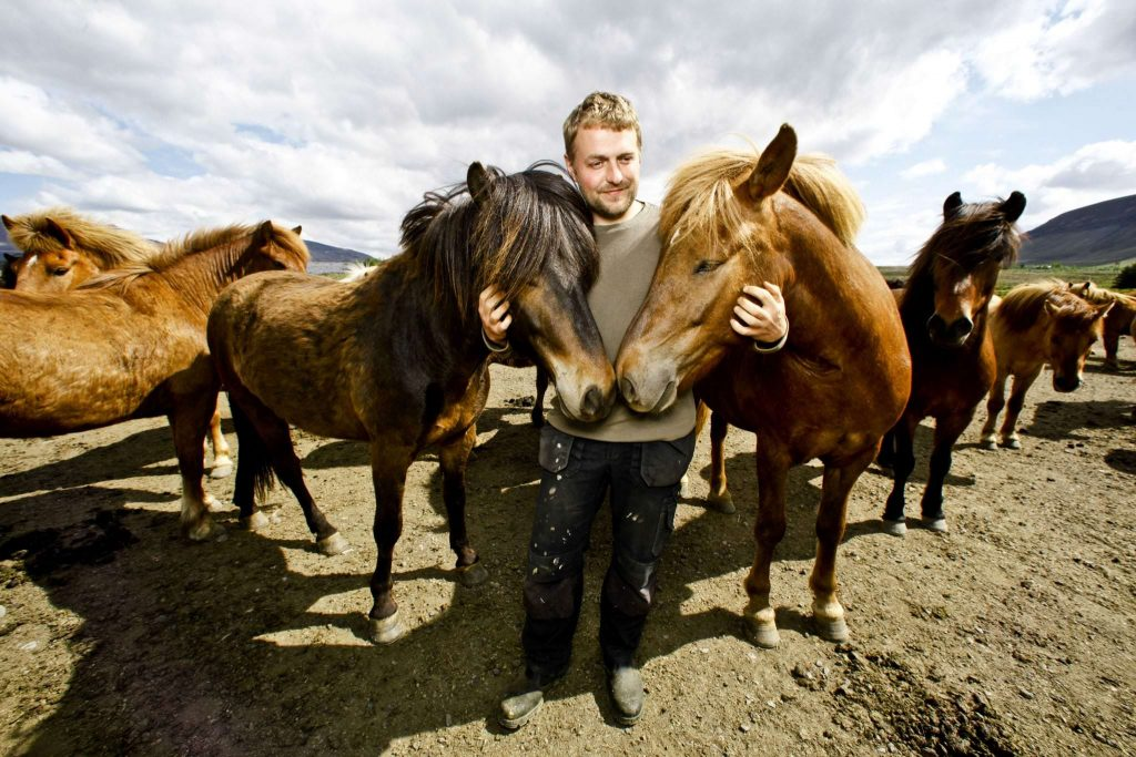 Horseback riding tours in South Iceland