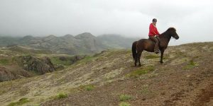 Horse riding in the fog