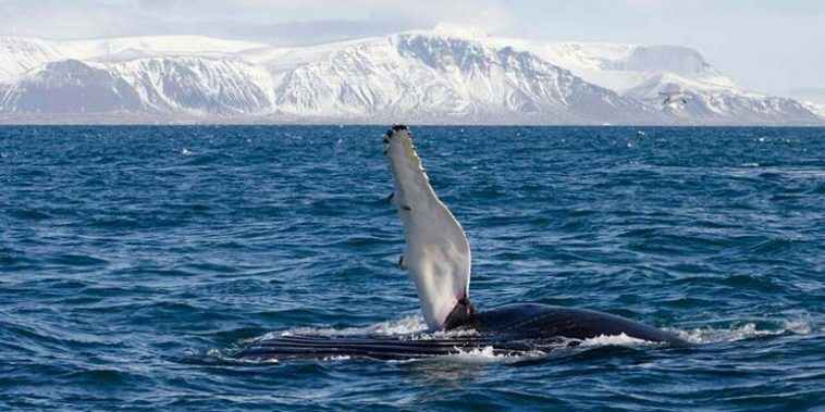 Winter Whale Watching
