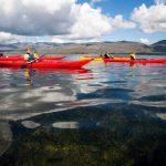 Kayaking Reykjavik