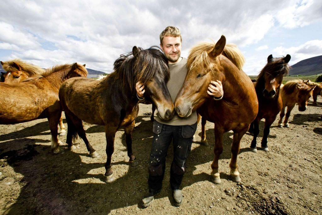 Horseback rental in Iceland