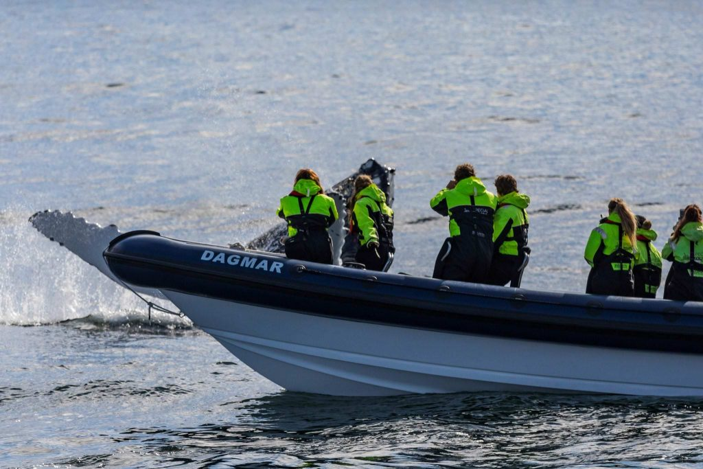 Express whale watching in Iceland