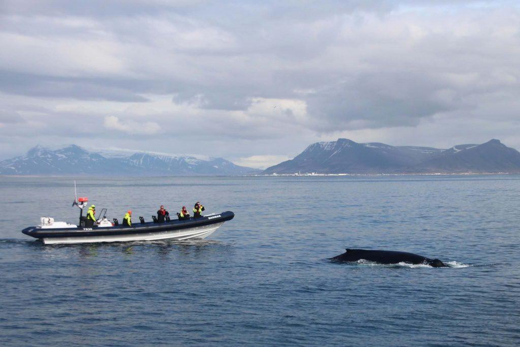 Rib Express from Reykjavik